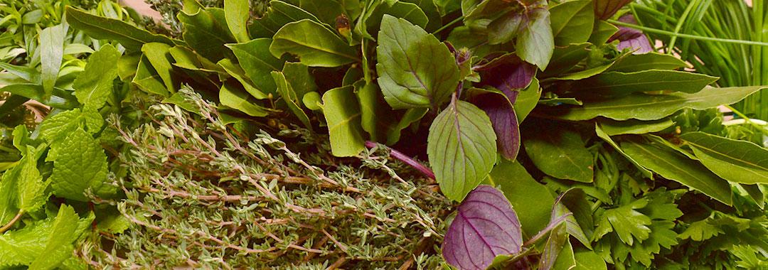 herbes, aromates