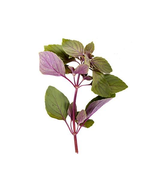 Basilic rouge - Edélices Primeur