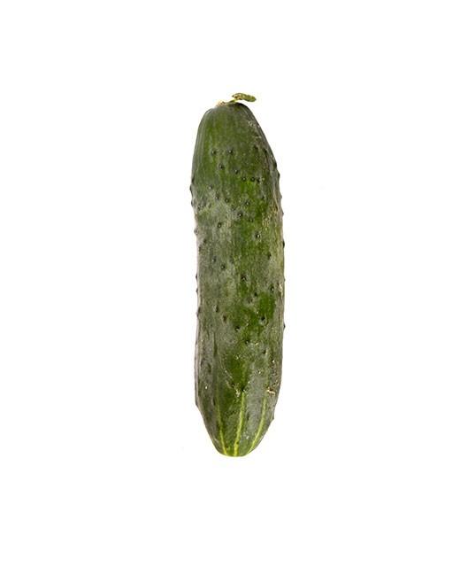Concombre Noa - Edélices Primeur