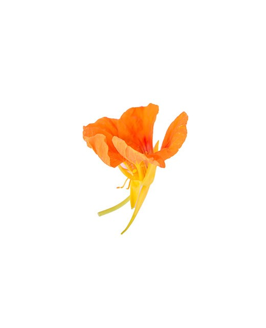 Fleurs de Capucine - Edélices Primeur