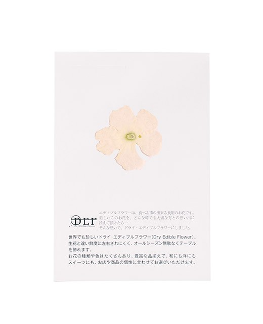 Fleurs comestibles séchées de verveine blanche - Neworks