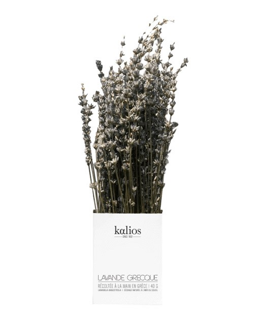 Lavande grecque en branche - Kalios
