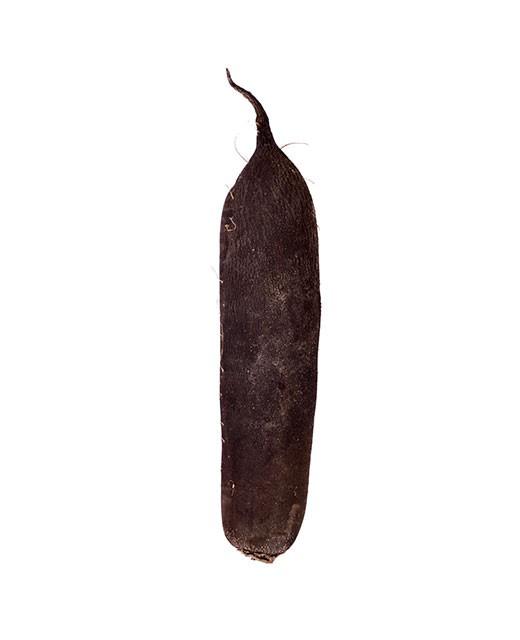 Radis noir - Edélices Primeur