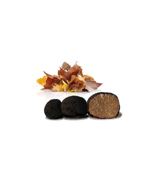 Truffes de Bourgogne fraîches 100g - Tuber Uncinatum - Truffe France