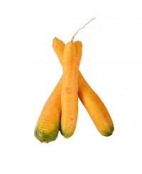Carotte jaune  - Edélices
