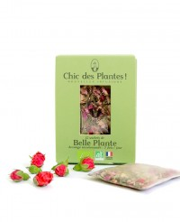 Infusion Belle Plante - Chic des Plantes