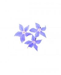 Fleurs de Bourrache - Edélices Primeur