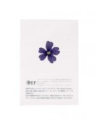 Fleurs comestibles séchées de verveine bleue - Neworks