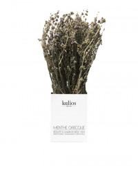 Menthe pouliot grecque en branche - Kalios