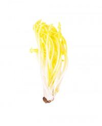 Pissenlit blanc - Edélices