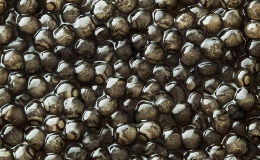 Caviar Beluga Impérial 125g - Kaviari