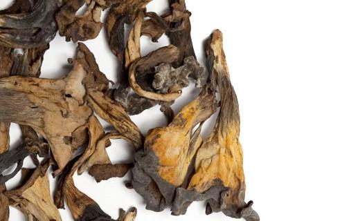 Trompettes de la mort séchées - La Maison du Champignon