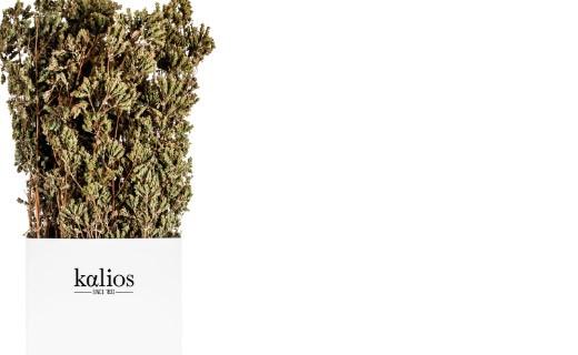 Origan en branches - Kalios