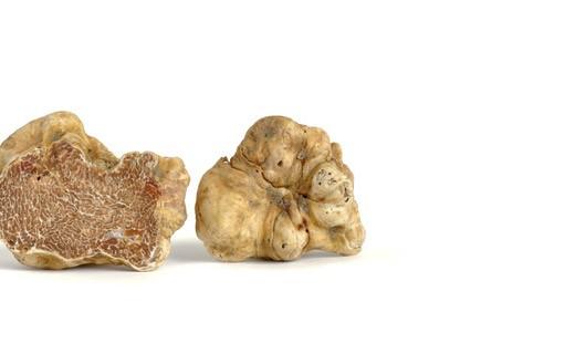 Truffes blanches d'Alba fraîches 50g - Tuber Magnatum pico - Truffe France
