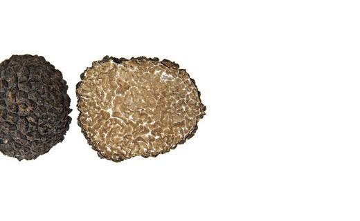 Truffes d'été fraîches 100g - Tuber Aestivum - Truffe France