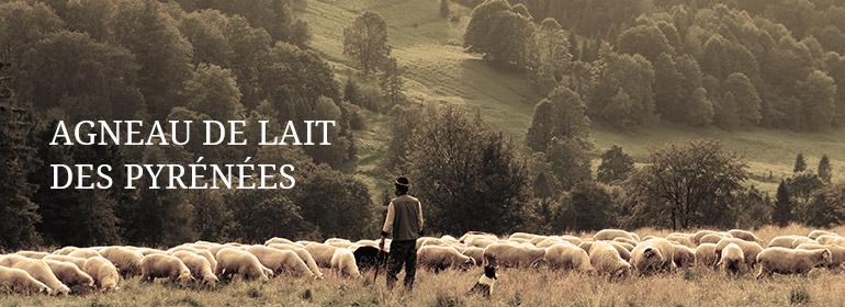 Agneau de lait des Pyrenees Cooprérative Axuria