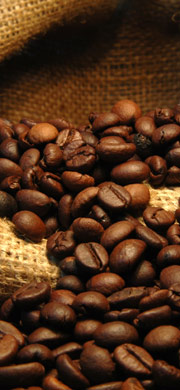 Voyage dans l'univers des cafés de terroir