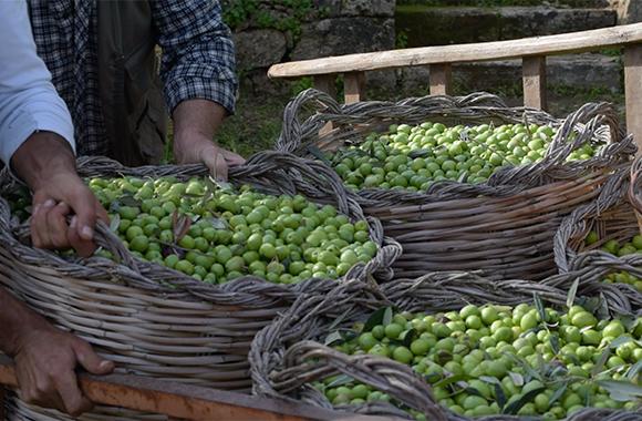 huile-olive-verte