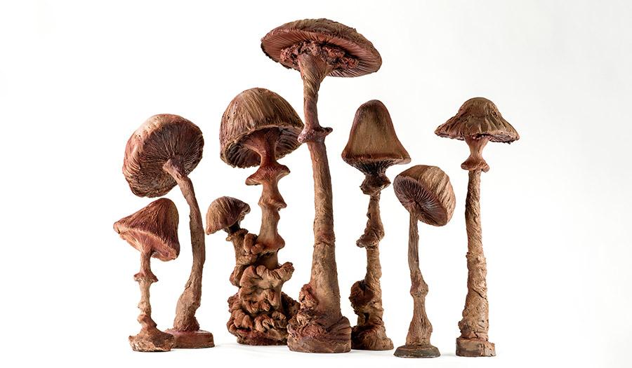 chocolat fabrice gillotte champignons